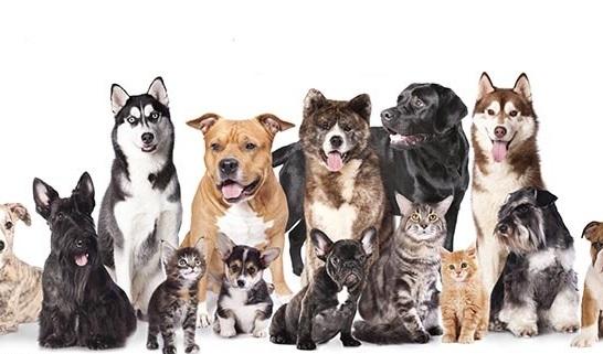 Seguros para perros o gatos