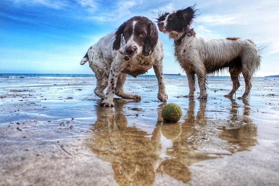 cuidados en vacaciones para perros