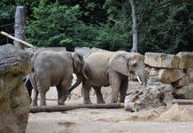 El zoológico de Caricuao