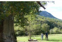 Los tres robles de Hortmoier - Patrimonio de la Garrotxa