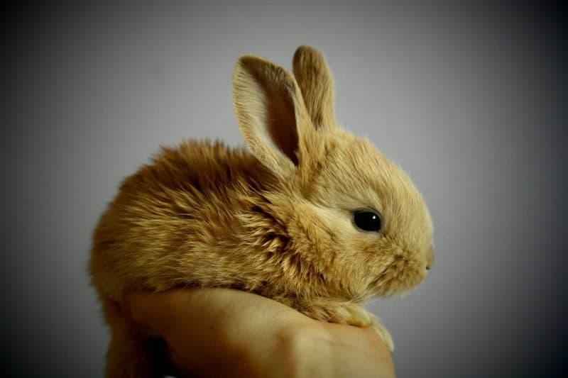 conejo con frío